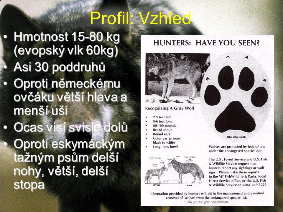 Profil: Vzhled Hmotnost 15-80 kg (evopský vlk 60kg)Hmotnost 15-80 kg (evopský vlk 60kg) Asi 30 poddruhůAsi 30 poddruhů Oproti německému ovčáku větší hlava a menší ušiOproti německému ovčáku větší hlava a menší uši Ocas visí svisle dolůOcas visí svisle dolů Oproti eskymáckým tažným psům delší nohy, větší, delší stopaOproti eskymáckým tažným psům delší nohy, větší, delší stopa