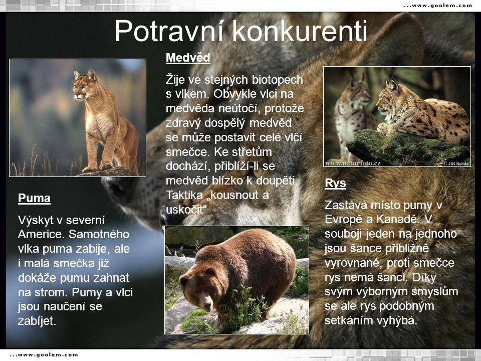 Potravní konkurenti Puma Výskyt v severní Americe.
