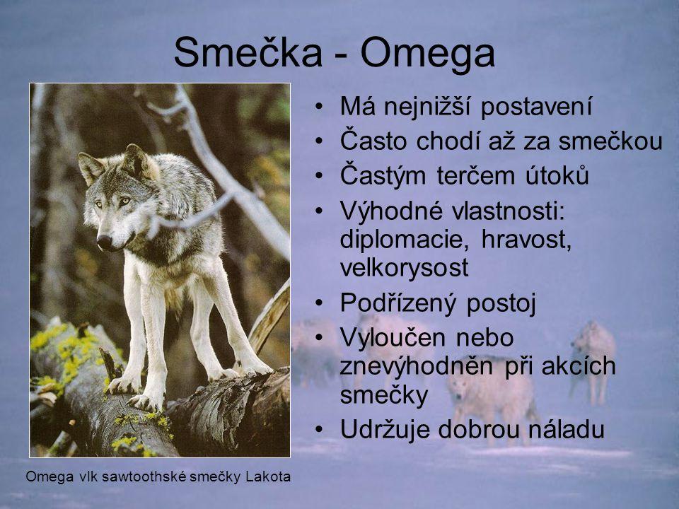 Smečka - Omega Má nejnižší postavení Často chodí až za smečkou Častým terčem útoků Výhodné vlastnosti: diplomacie, hravost, velkorysost Podřízený postoj Vyloučen nebo znevýhodněn při akcích smečky Udržuje dobrou náladu Omega vlk sawtoothské smečky Lakota