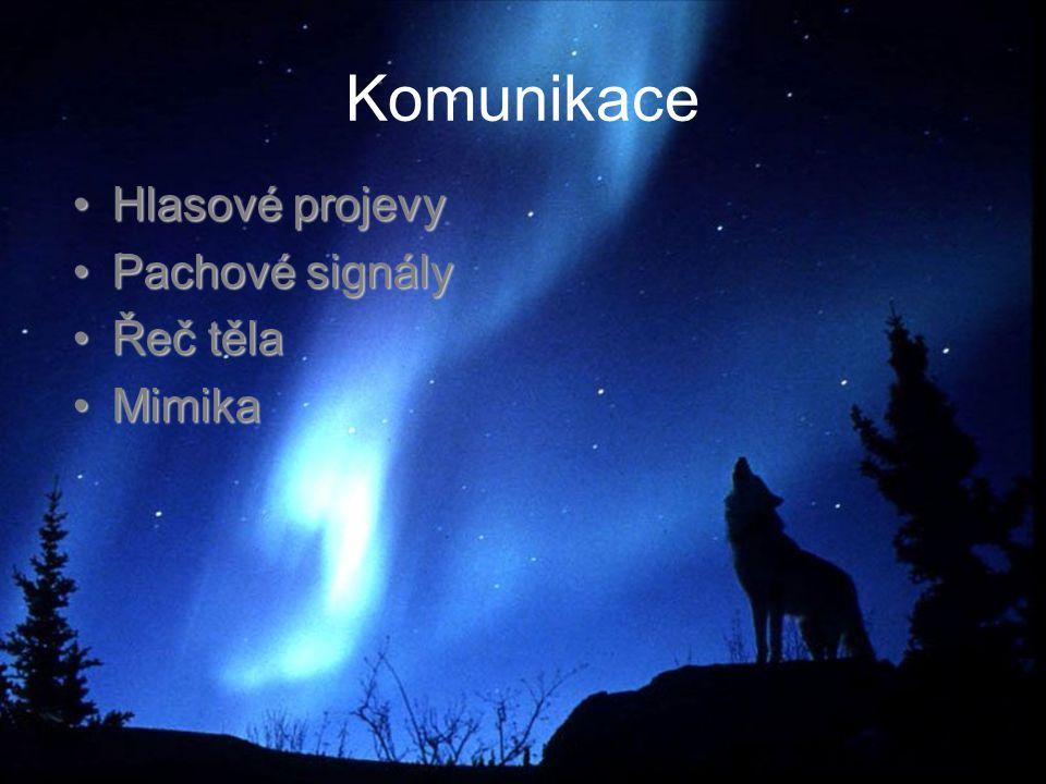 Komunikace Hlasové projevyHlasové projevy Pachové signályPachové signály Řeč tělaŘeč těla MimikaMimika