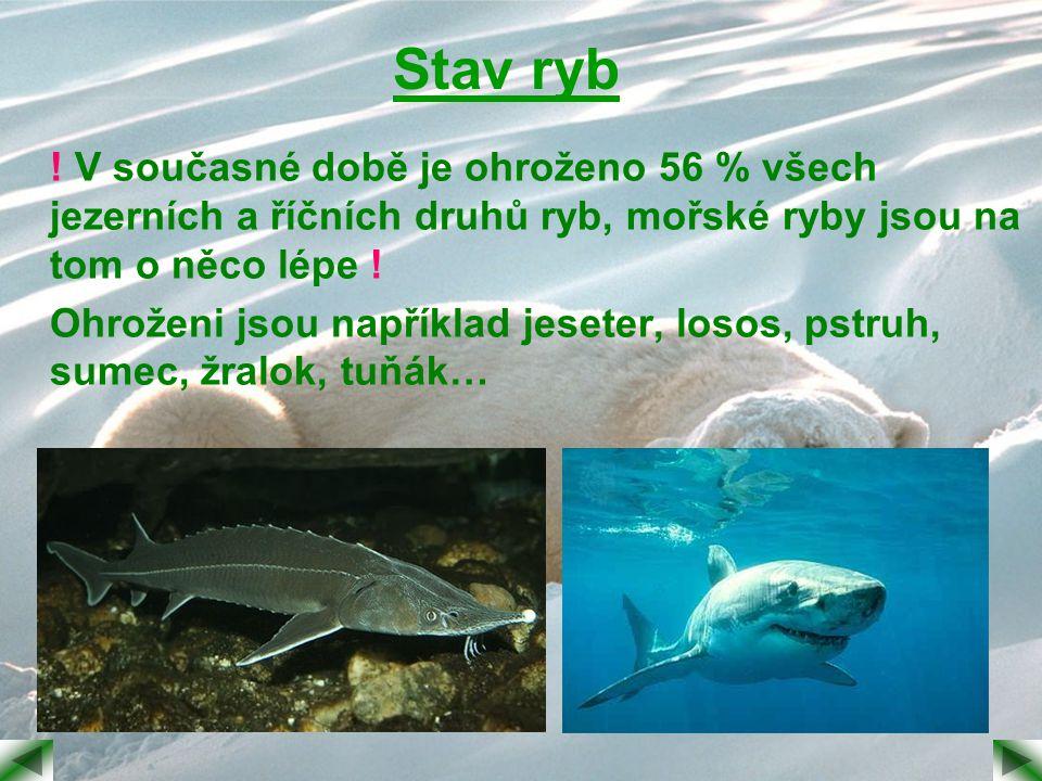 Stav ryb ! V současné době je ohroženo 56 % všech jezerních a říčních druhů ryb, mořské ryby jsou na tom o něco lépe ! Ohroženi jsou například jeseter