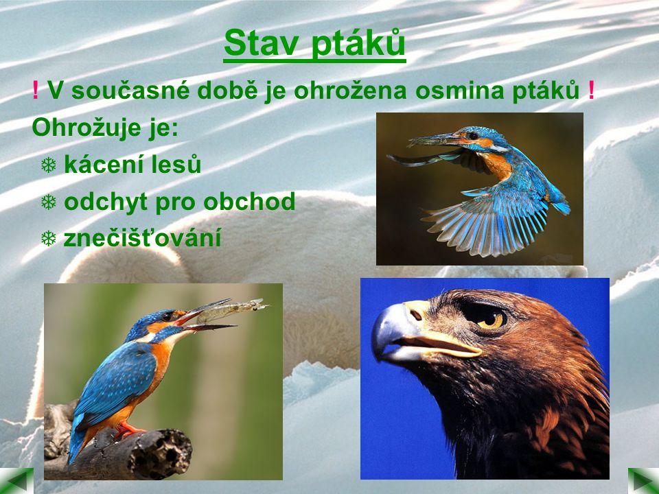 Stav ptáků ! V současné době je ohrožena osmina ptáků ! Ohrožuje je:  kácení lesů  odchyt pro obchod  znečišťování