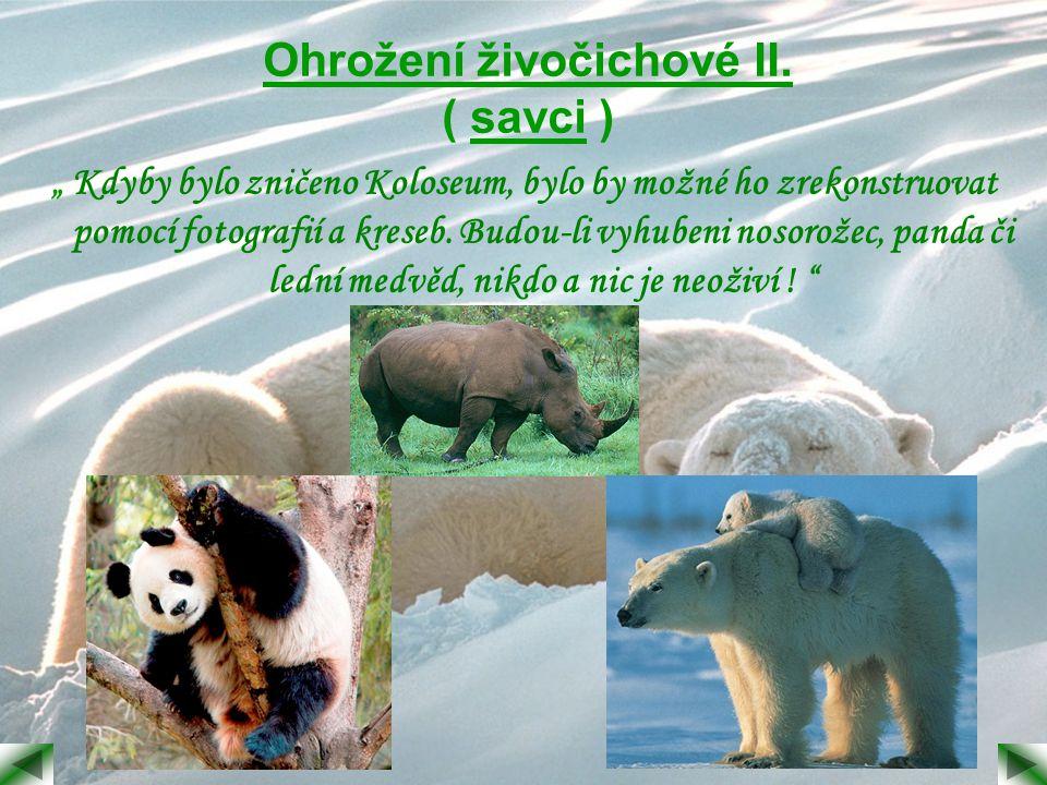 Proč jsou živočichové v ohrožení nebo vymírají.