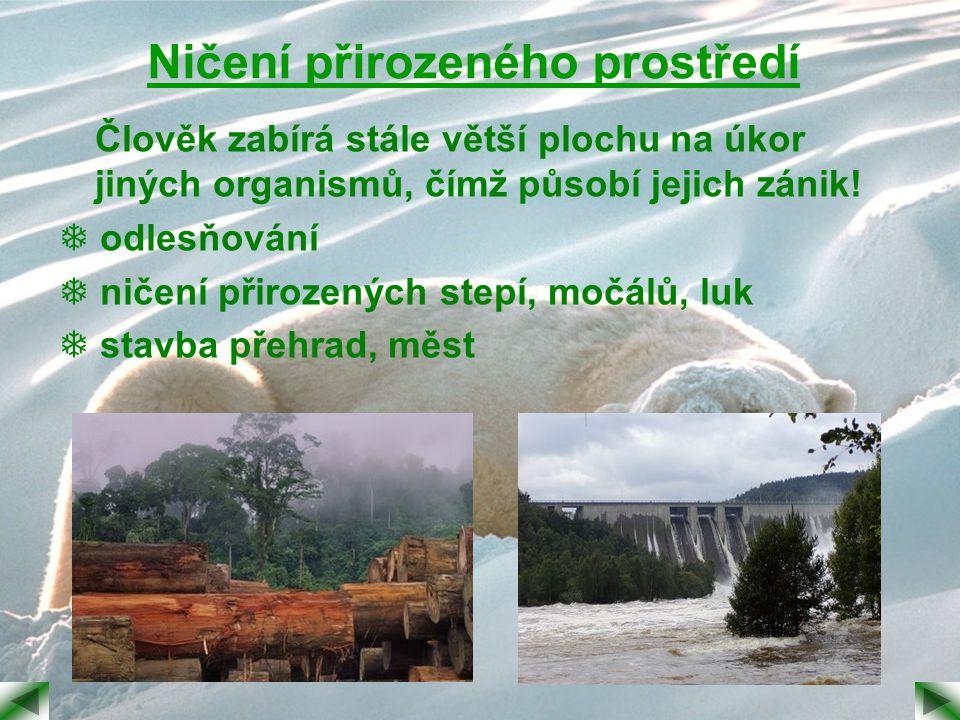 Ničení přirozeného prostředí Člověk zabírá stále větší plochu na úkor jiných organismů, čímž působí jejich zánik!  odlesňování  ničení přirozených s