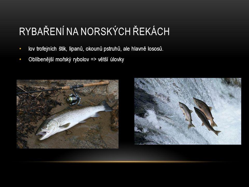 RYBAŘENÍ NA NORSKÝCH ŘEKÁCH lov trofejních štik, lipanů, okounů pstruhů, ale hlavně lososů.