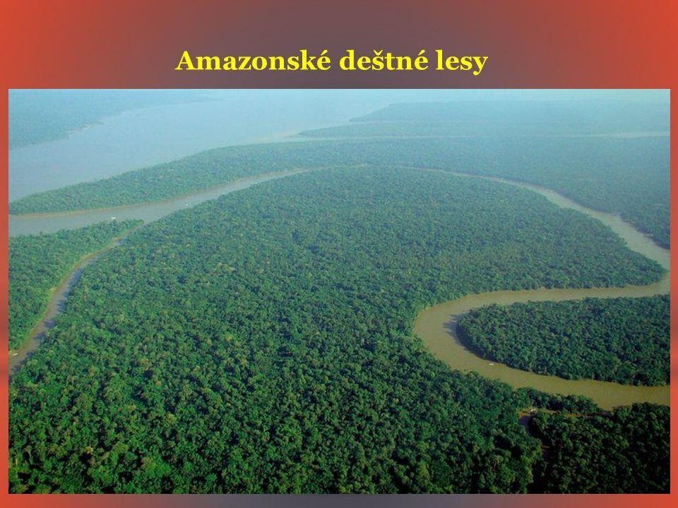 Amazonské deštné lesy