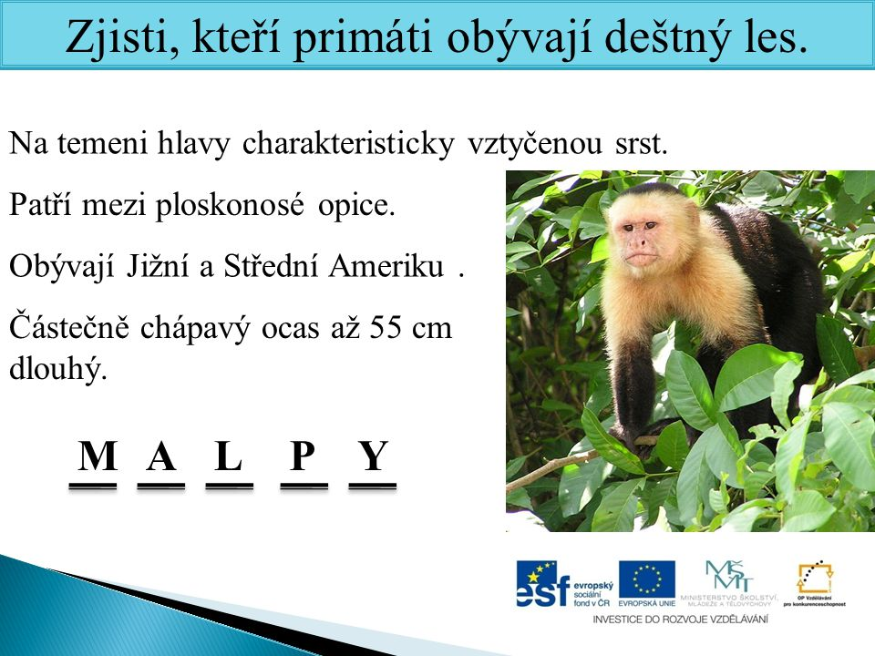 Zjisti, kteří primáti obývají deštný les.Na temeni hlavy charakteristicky vztyčenou srst.