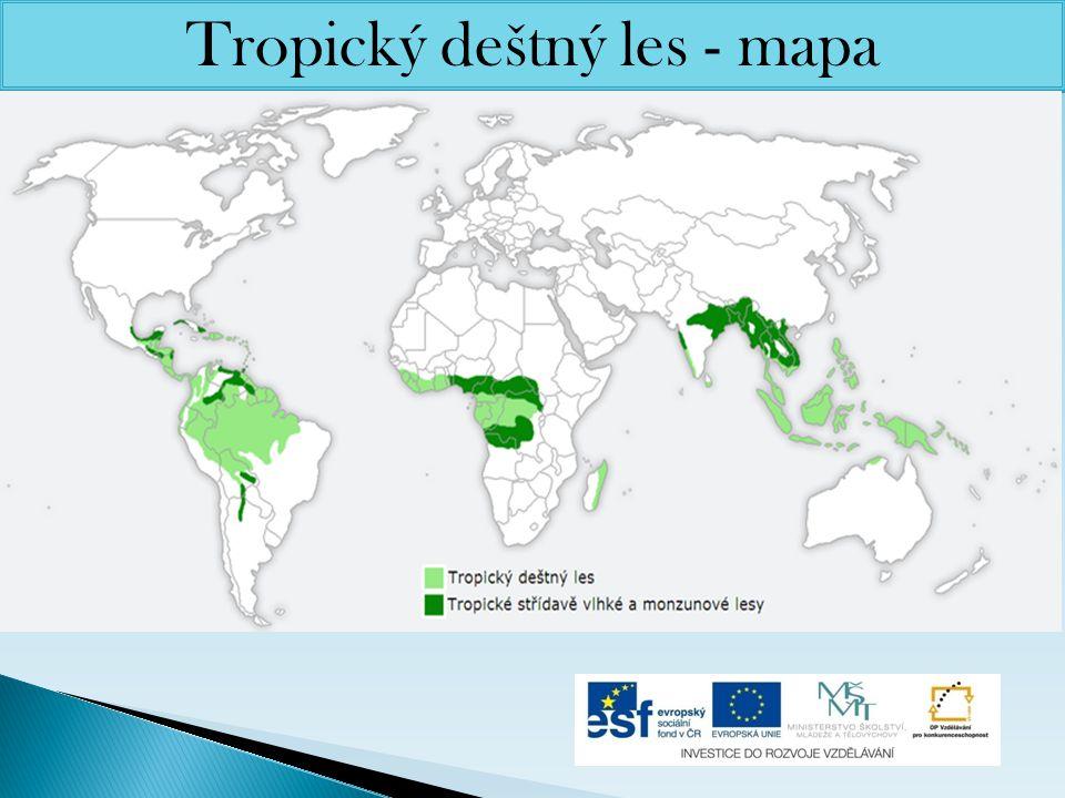Tropický deštný les - mapa
