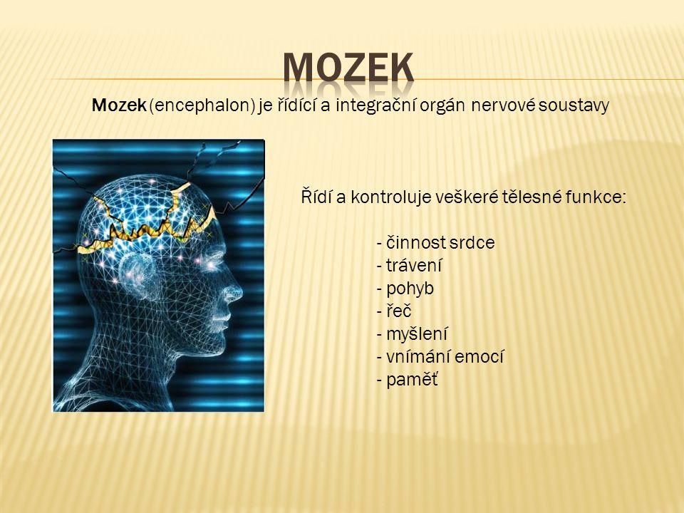 Řídí a kontroluje veškeré tělesné funkce: - činnost srdce - trávení - pohyb - řeč - myšlení - vnímání emocí - paměť Mozek (encephalon) je řídící a int