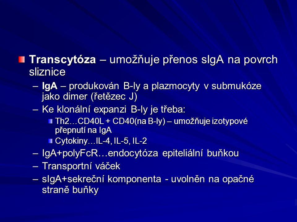 Transcytóza – umožňuje přenos sIgA na povrch sliznice –IgA – produkován B-ly a plazmocyty v submukóze jako dimer (řetězec J) –Ke klonální expanzi B-ly