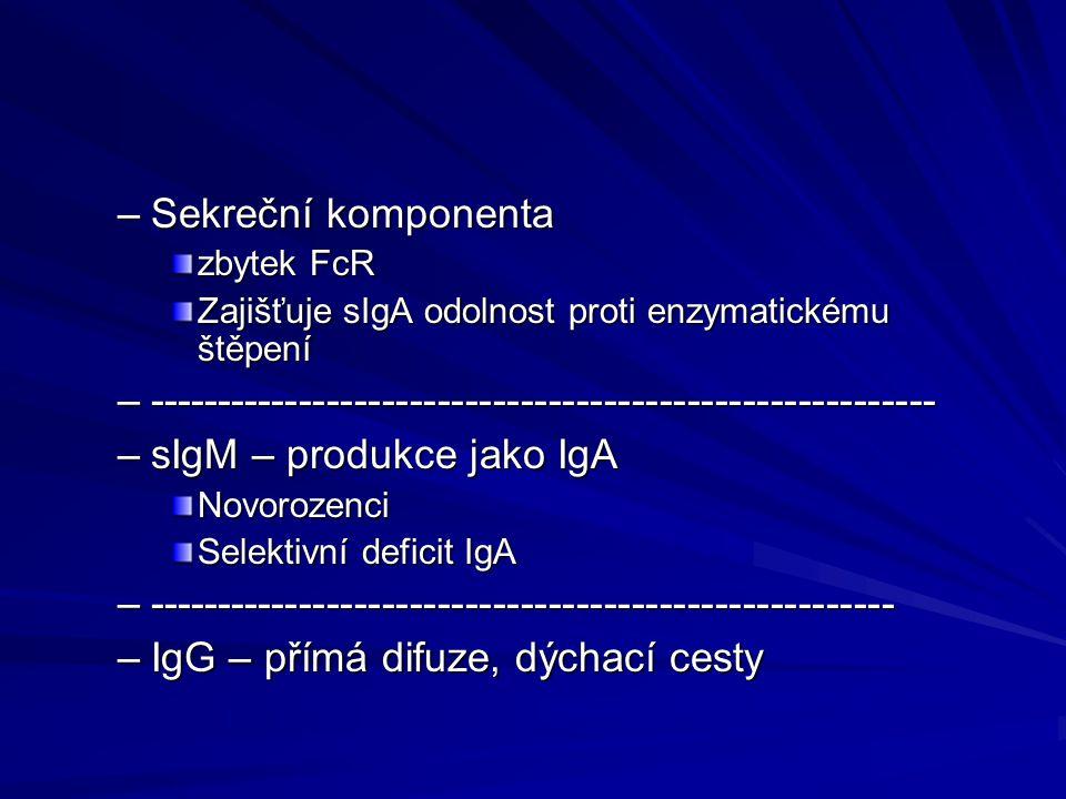 –Sekreční komponenta zbytek FcR Zajišťuje sIgA odolnost proti enzymatickému štěpení –--------------------------------------------------------- –sIgM –