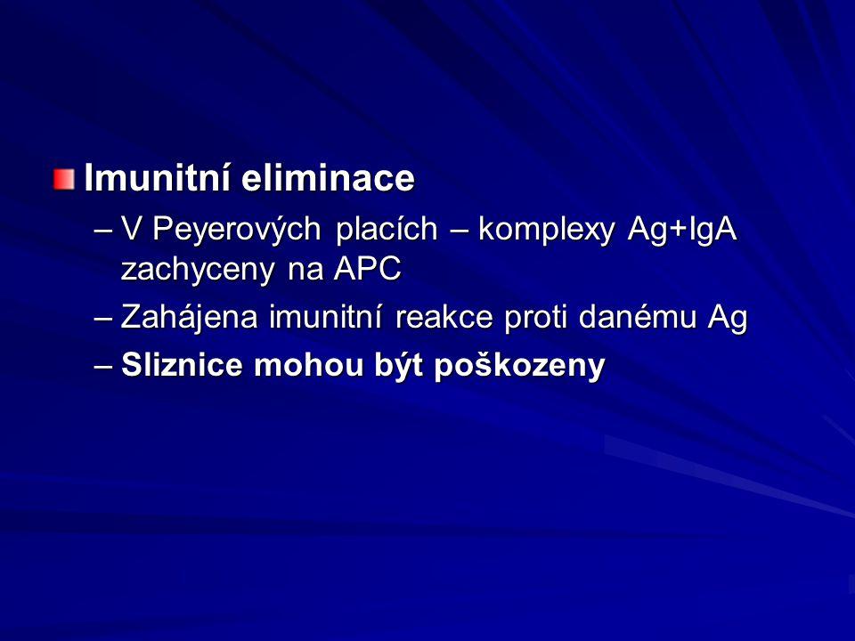 Imunitní eliminace –V Peyerových placích – komplexy Ag+IgA zachyceny na APC –Zahájena imunitní reakce proti danému Ag –Sliznice mohou být poškozeny
