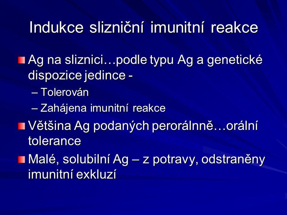 Indukce slizniční imunitní reakce Ag na sliznici…podle typu Ag a genetické dispozice jedince - –Tolerován –Zahájena imunitní reakce Většina Ag podanýc