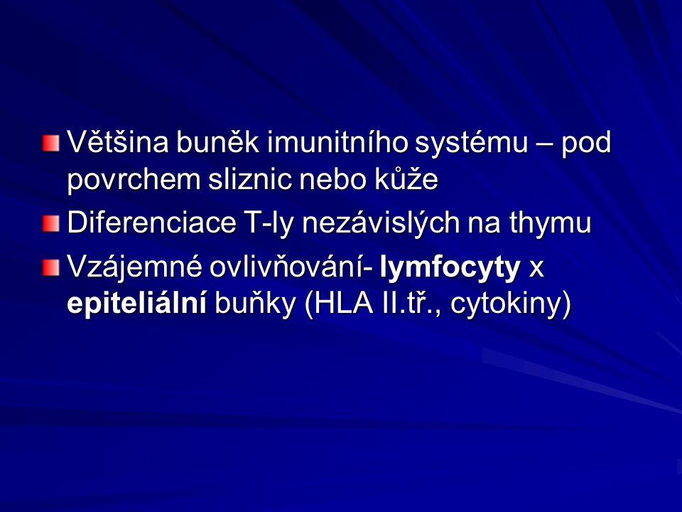 Většina buněk imunitního systému – pod povrchem sliznic nebo kůže Diferenciace T-ly nezávislých na thymu Vzájemné ovlivňování- lymfocyty x epiteliální