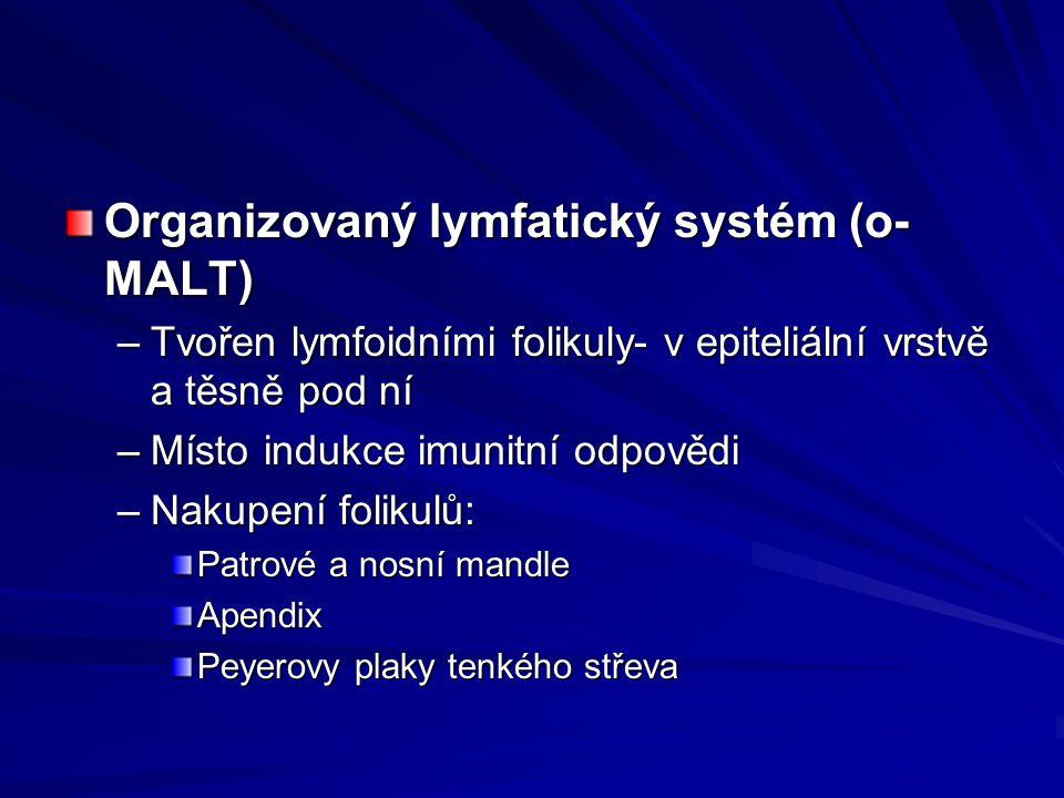 Organizovaný lymfatický systém (o- MALT) –Tvořen lymfoidními folikuly- v epiteliální vrstvě a těsně pod ní –Místo indukce imunitní odpovědi –Nakupení