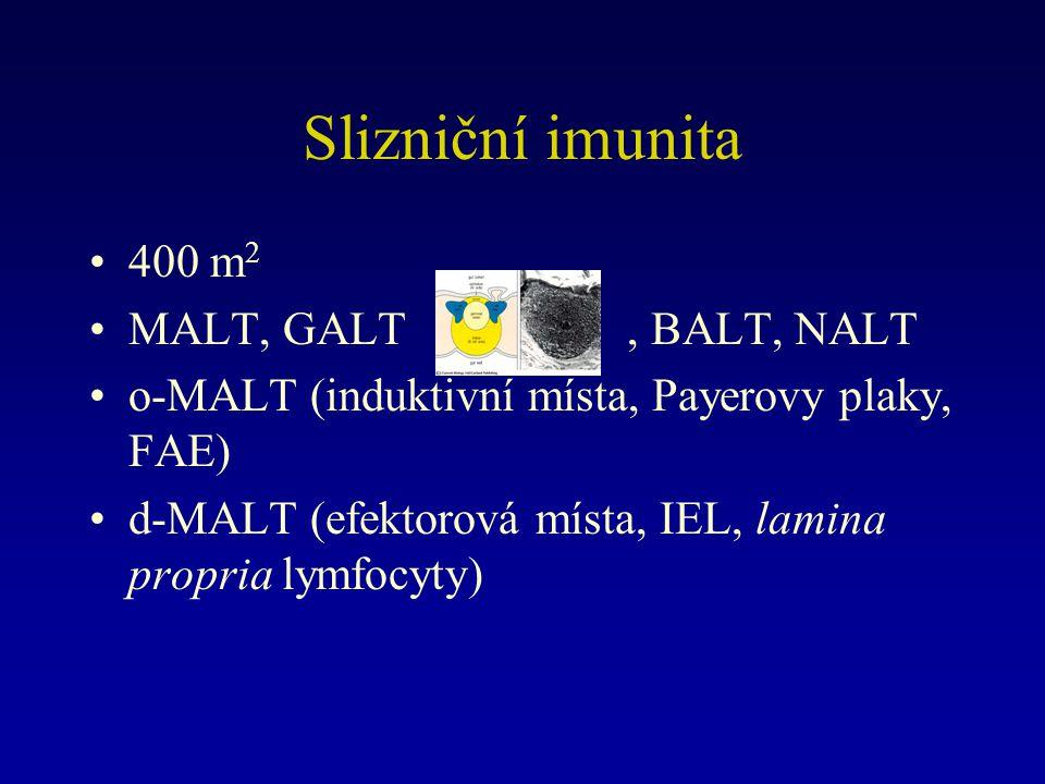 Slizniční imunita 400 m 2 MALT, GALT, BALT, NALT o-MALT (induktivní místa, Payerovy plaky, FAE) d-MALT (efektorová místa, IEL, lamina propria lymfocyty)