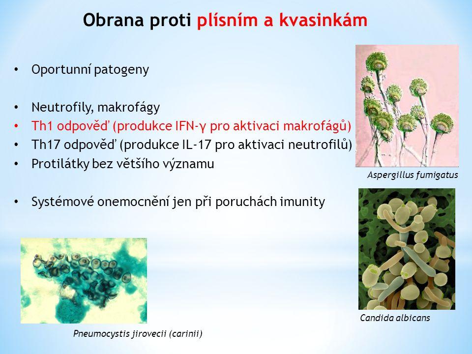 Obrana proti plísním a kvasinkám Aspergillus fumigatus Candida albicans Oportunní patogeny Neutrofily, makrofágy Th1 odpověď (produkce IFN-γ pro aktivaci makrofágů) Th17 odpověď (produkce IL-17 pro aktivaci neutrofilů) Protilátky bez většího významu Systémové onemocnění jen při poruchách imunity Pneumocystis jirovecii (carinii)