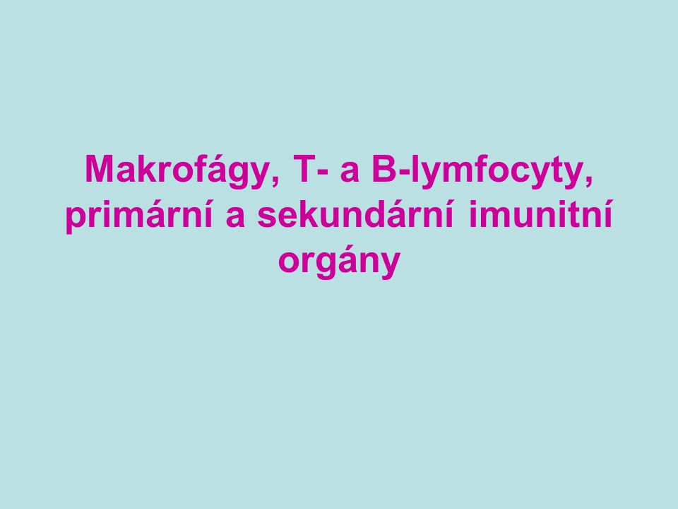 Makrofágy Terminální diferenciační stádium monocyto- makrofágové linie Monocyto-makrofágové buňky se diferencují v kostní dřeni z myeloidního prekurzoru, který vzniká z pluripotentní kmenové bb (CD34) Zralé monocyty vyplaveny do periferní krve, poté jsou zachyceny v orgánech a přemění se ve tkáňové makrofágy