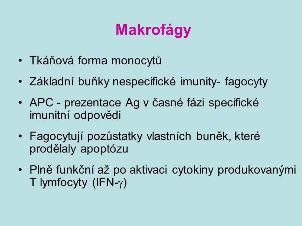 Makrofágy Tkáňová forma monocytů Základní buňky nespecifické imunity- fagocyty APC - prezentace Ag v časné fázi specifické imunitní odpovědi Fagocytuj