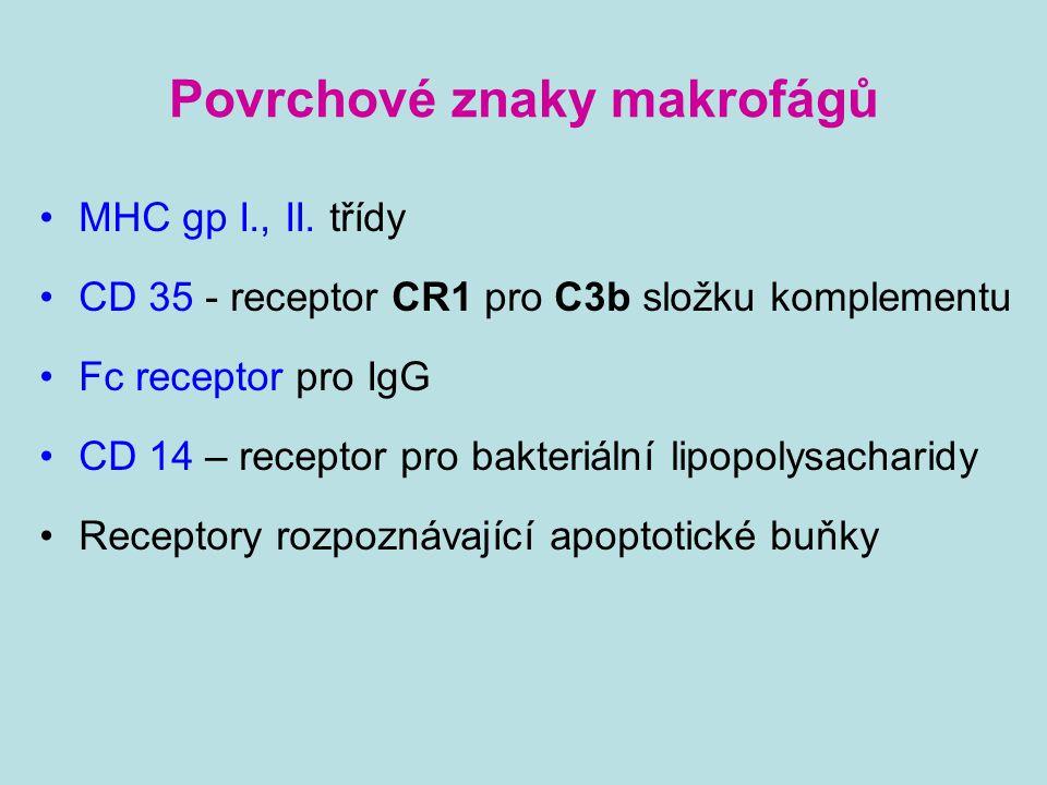 Povrchové znaky makrofágů MHC gp I., II. třídy CD 35 - receptor CR1 pro C3b složku komplementu Fc receptor pro IgG CD 14 – receptor pro bakteriální li