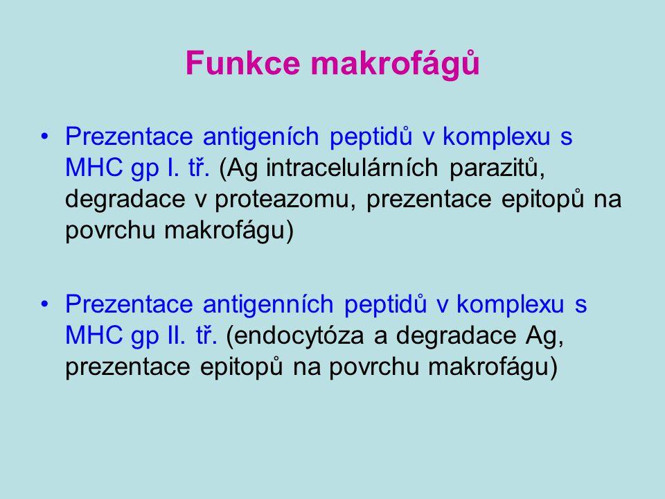 Funkce makrofágů Prezentace antigeních peptidů v komplexu s MHC gp I. tř. (Ag intracelulárních parazitů, degradace v proteazomu, prezentace epitopů na