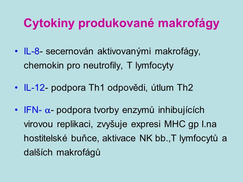Cytokiny produkované makrofágy IL-8- secernován aktivovanými makrofágy, chemokin pro neutrofily, T lymfocyty IL-12- podpora Th1 odpovědi, útlum Th2 IF