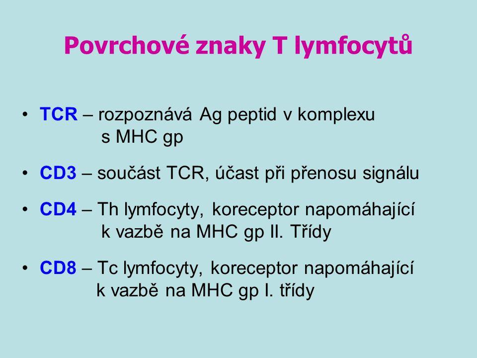 Povrchové znaky T lymfocytů TCR – rozpoznává Ag peptid v komplexu s MHC gp CD3 – součást TCR, účast při přenosu signálu CD4 – Th lymfocyty, koreceptor