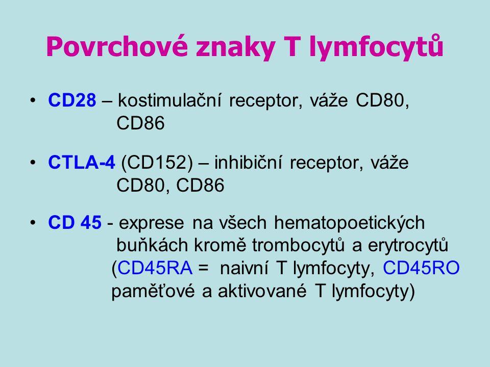 Povrchové znaky T lymfocytů CD28 – kostimulační receptor, váže CD80, CD86 CTLA-4 (CD152) – inhibiční receptor, váže CD80, CD86 CD 45 - exprese na všec