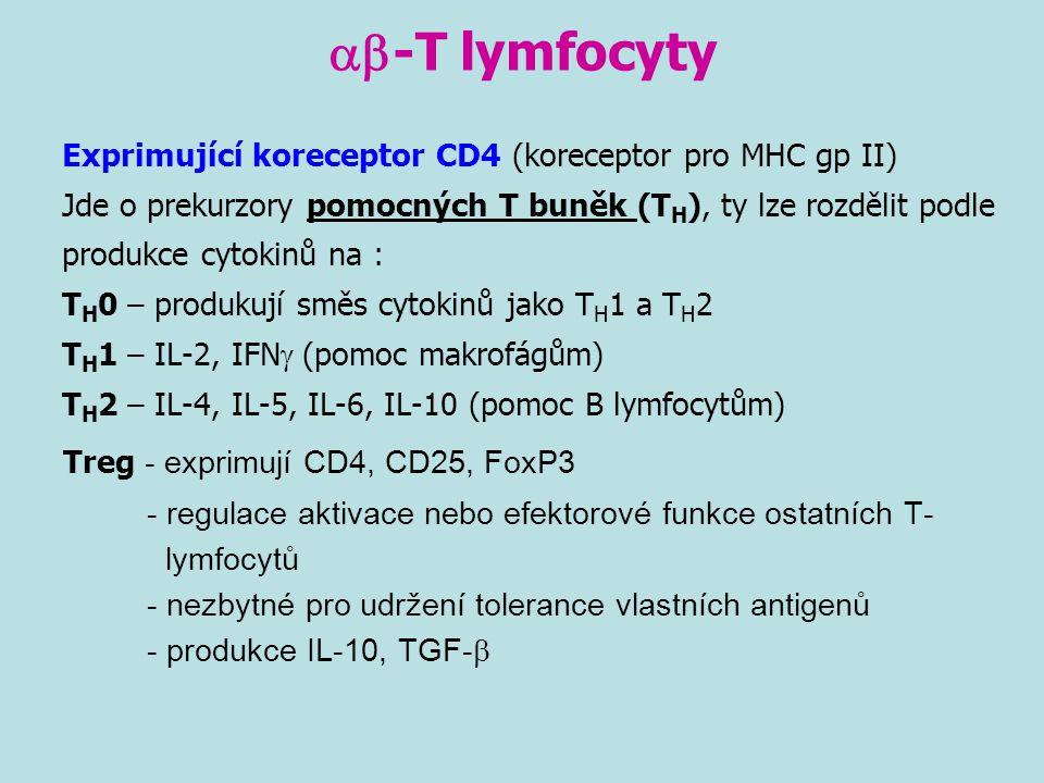  -T lymfocyty Exprimující koreceptor CD4 (koreceptor pro MHC gp II) Jde o prekurzory pomocných T buněk (T H ), ty lze rozdělit podle produkce cytoki