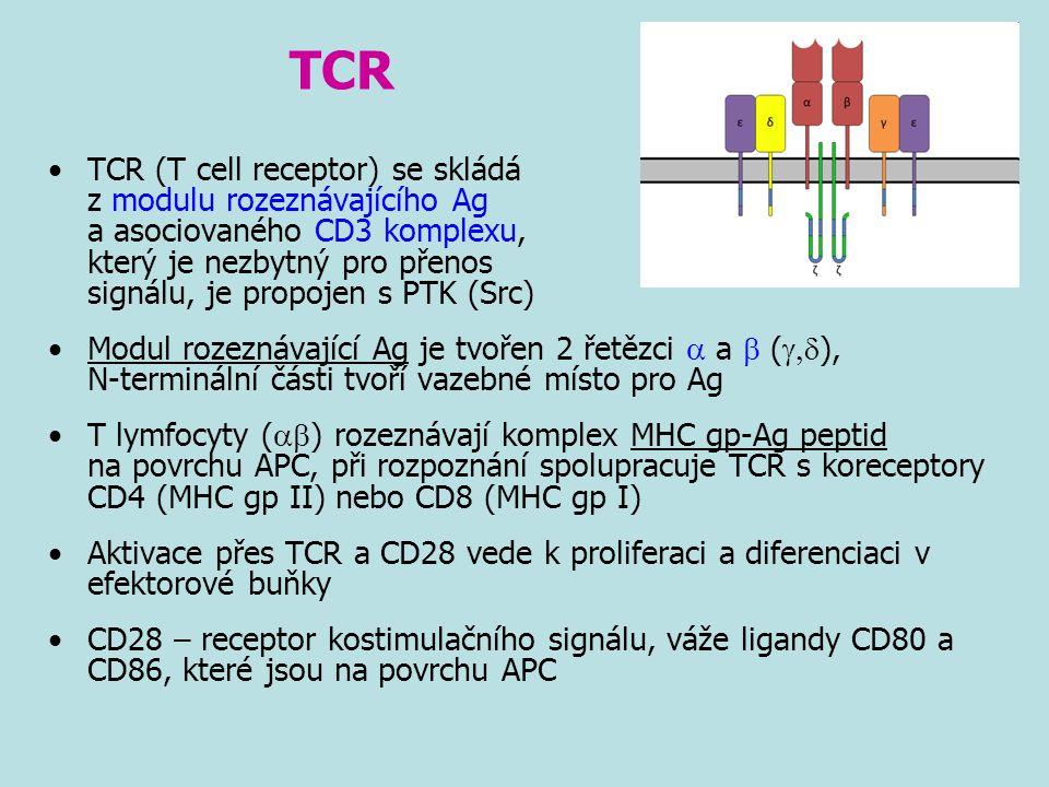 TCR TCR (T cell receptor) se skládá z modulu rozeznávajícího Ag a asociovaného CD3 komplexu, který je nezbytný pro přenos signálu, je propojen s PTK (