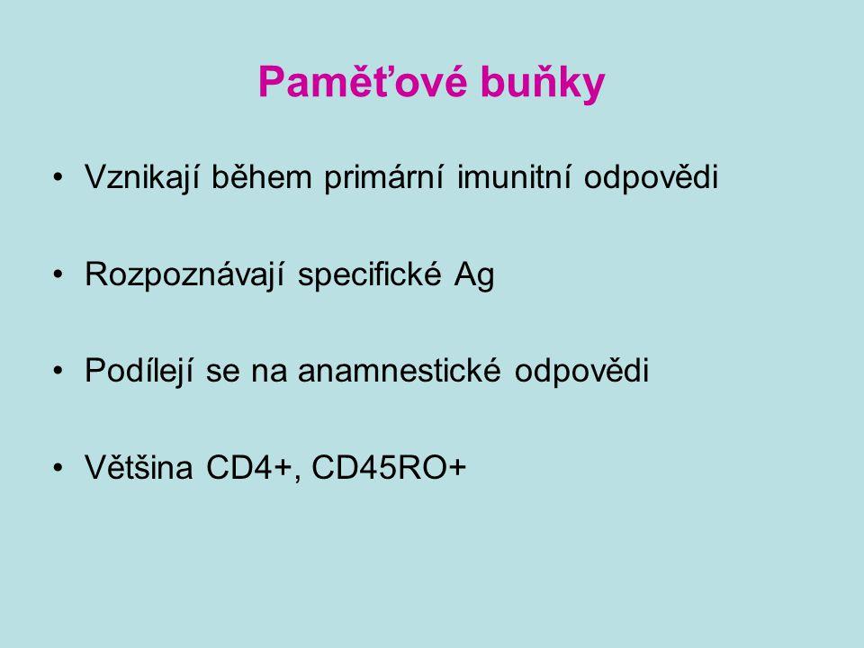 Paměťové buňky Vznikají během primární imunitní odpovědi Rozpoznávají specifické Ag Podílejí se na anamnestické odpovědi Většina CD4+, CD45RO+