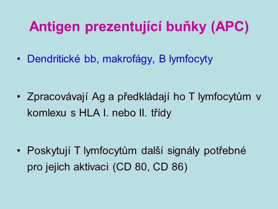 Antigen prezentující buňky (APC) Dendritické bb, makrofágy, B lymfocyty Zpracovávají Ag a předkládají ho T lymfocytům v komlexu s HLA I. nebo II. tříd