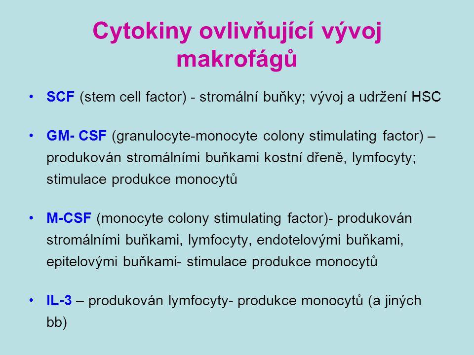 Cytokiny ovlivňující vývoj makrofágů SCF (stem cell factor) - stromální buňky; vývoj a udržení HSC GM- CSF (granulocyte-monocyte colony stimulating fa