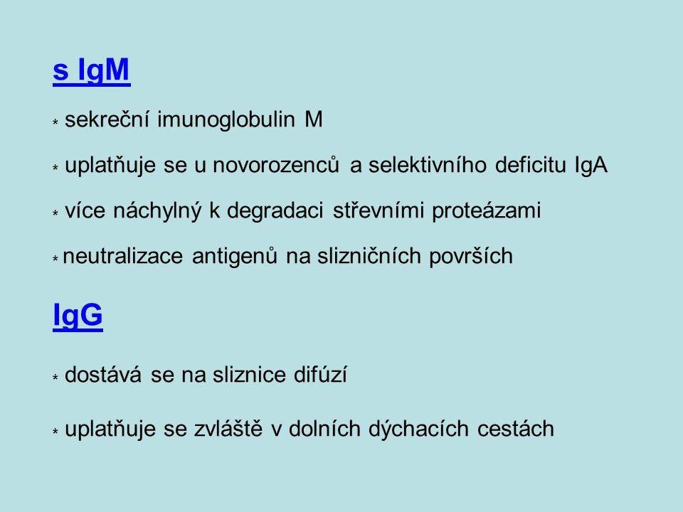 s IgM * sekreční imunoglobulin M * uplatňuje se u novorozenců a selektivního deficitu IgA * více náchylný k degradaci střevními proteázami * neutraliz