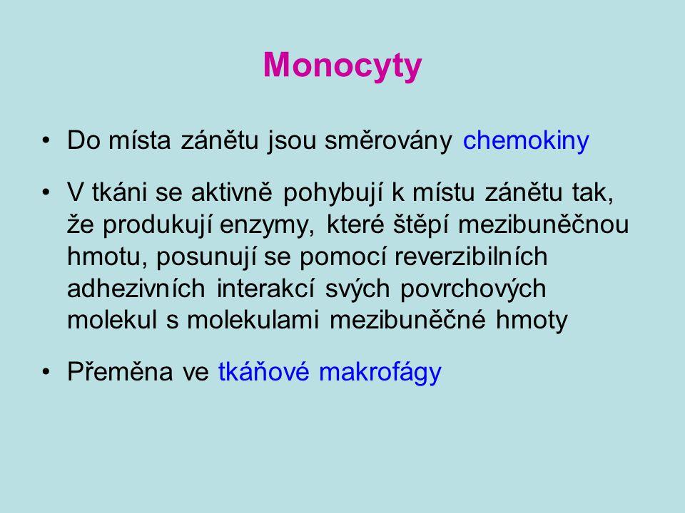 Monocyty Do místa zánětu jsou směrovány chemokiny V tkáni se aktivně pohybují k místu zánětu tak, že produkují enzymy, které štěpí mezibuněčnou hmotu,