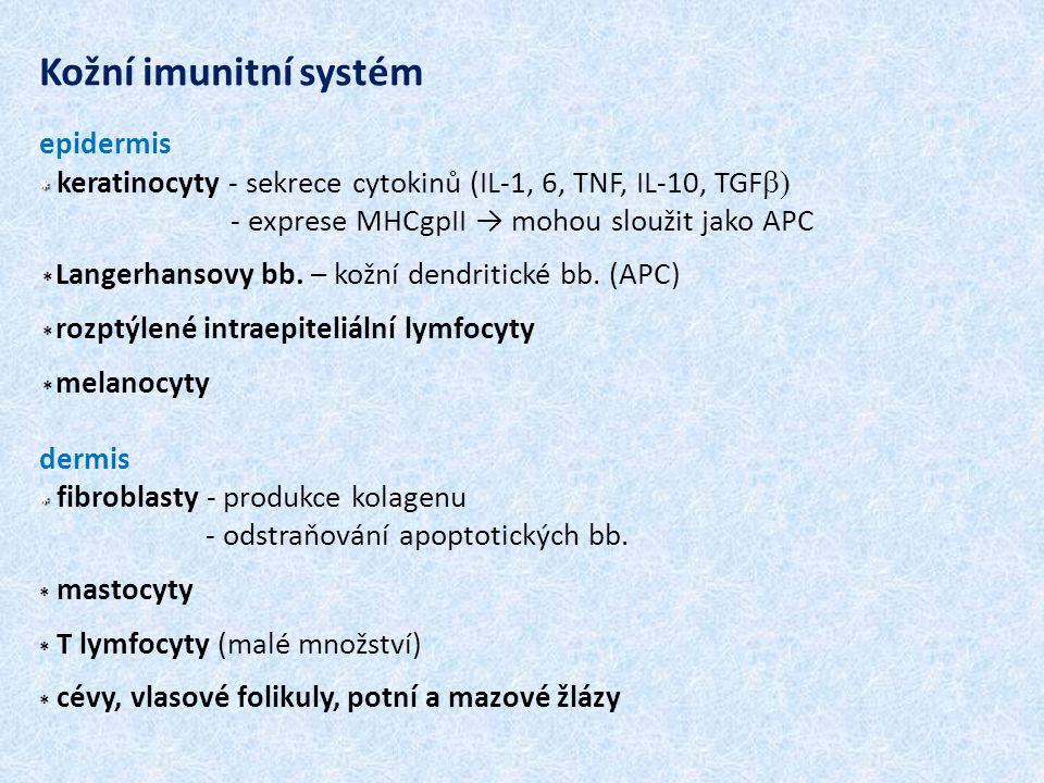* * Kožní imunitní systém epidermis * keratinocyty - sekrece cytokinů (IL-1, 6, TNF, IL-10, TGF   - exprese MHCgpII → mohou