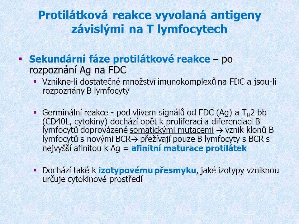 * * zvýšená jaterní syntéza některých sérových transportních proteinů (ceruloplasmin, transferin) * zvýšená syntéza proteázových inhibitorů (   makroglobulín) * leukocytóza Septický šok – při masivním průniku mikroorganismů do krevního oběhu Anafylaktický šok – při degranulaci bazofilů po kontaktu s alergenem