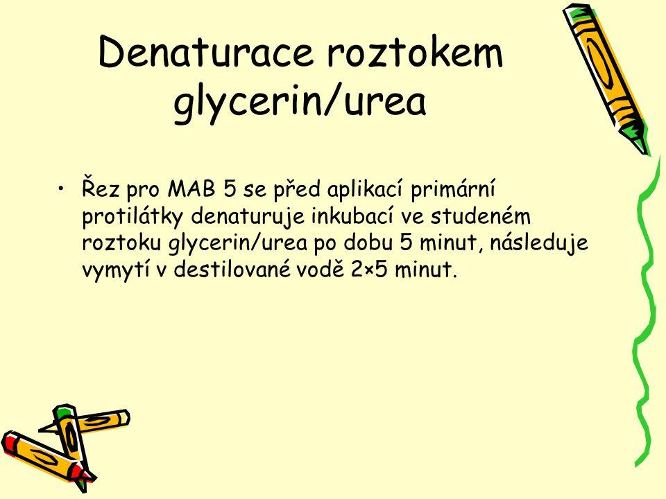 Denaturace roztokem glycerin/urea Řez pro MAB 5 se před aplikací primární protilátky denaturuje inkubací ve studeném roztoku glycerin/urea po dobu 5 m