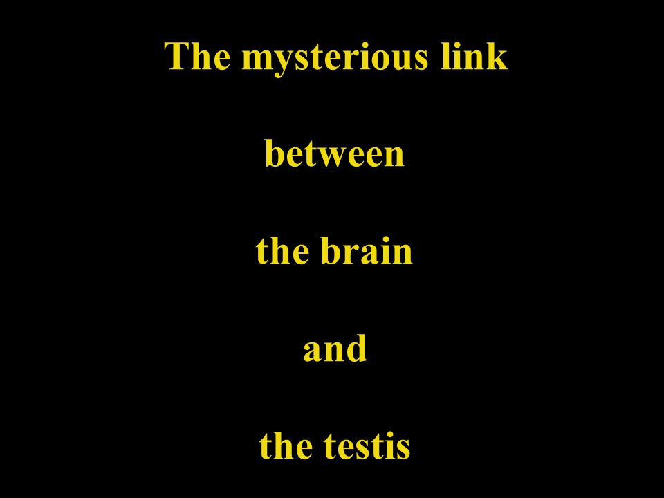 The mysterious link between the brain and the testis