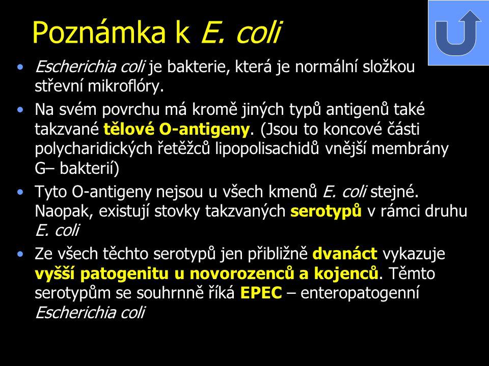 Poznámka k E. coli Escherichia coli je bakterie, která je normální složkou střevní mikroflóry. Na svém povrchu má kromě jiných typů antigenů také takz