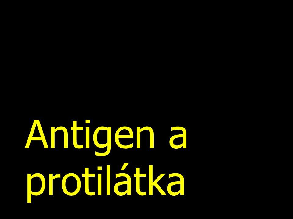 Antigen a protilátka