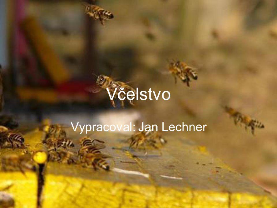 Včelstvo Včela medonosná žije v početných společenstvech – včelstvech.