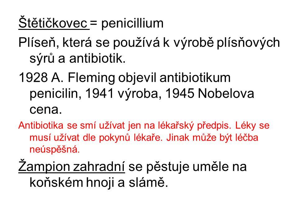 Štětičkovec = penicillium Plíseň, která se používá k výrobě plísňových sýrů a antibiotik. 1928 A. Fleming objevil antibiotikum penicilin, 1941 výroba,