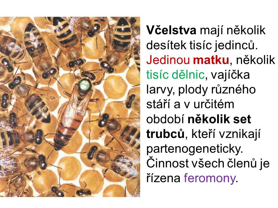 Včelstva mají několik desítek tisíc jedinců. Jedinou matku, několik tisíc dělnic, vajíčka larvy, plody různého stáří a v určitém období několik set tr