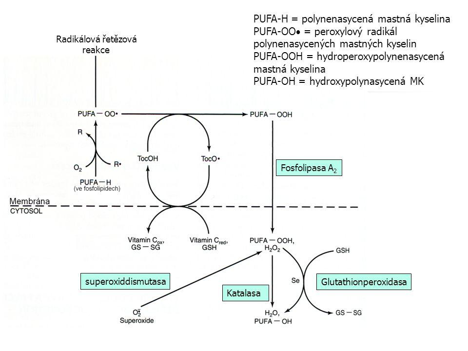 Fosfolipasa A 2 Glutathionperoxidasa Katalasa superoxiddismutasa Radikálová řetězová reakce PUFA-H = polynenasycená mastná kyselina PUFA-OO  = peroxylový radikál polynenasycených mastných kyselin PUFA-OOH = hydroperoxypolynenasycená mastná kyselina PUFA-OH = hydroxypolynasycená MK