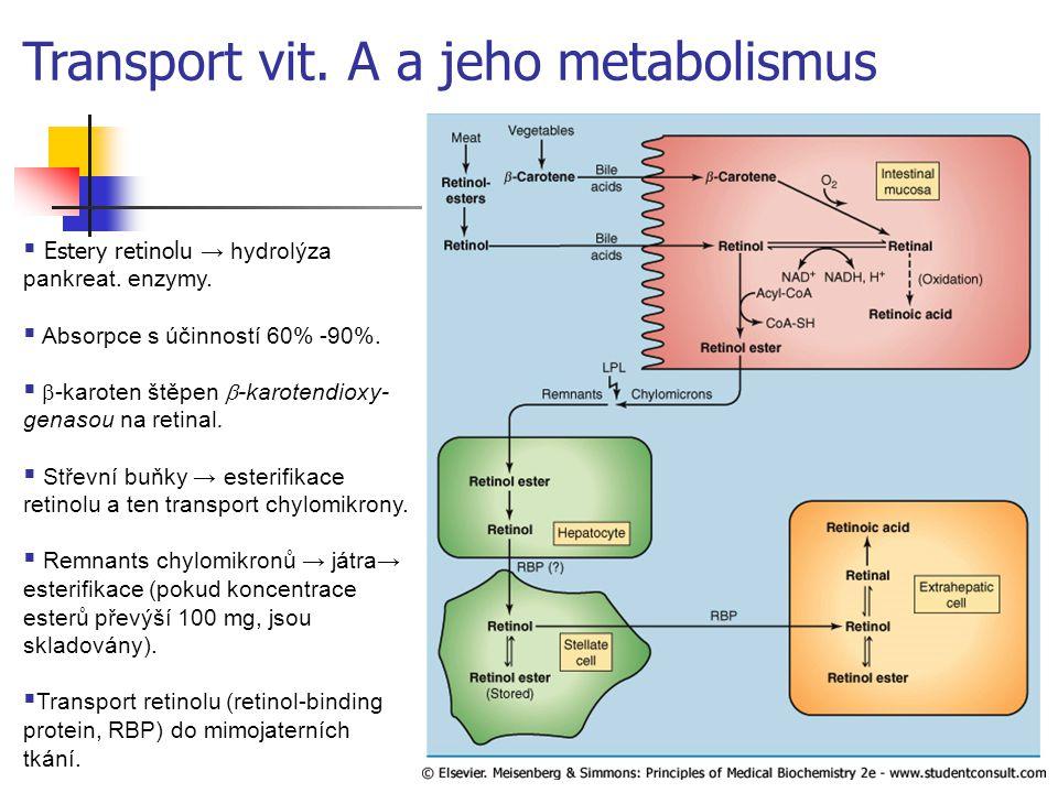  Estery retinolu → hydrolýza pankreat. enzymy.  Absorpce s účinností 60% -90%.   -karoten štěpen  -karotendioxy- genasou na retinal.  Střevní b