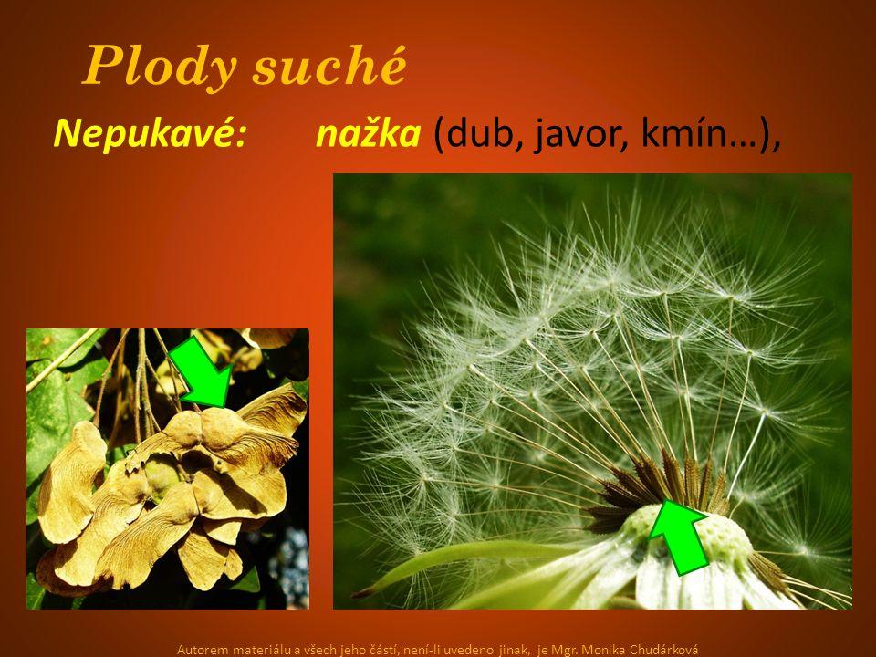 Plody suché Nepukavé: nažka (dub, javor, kmín…), Autorem materiálu a všech jeho částí, není-li uvedeno jinak, je Mgr.