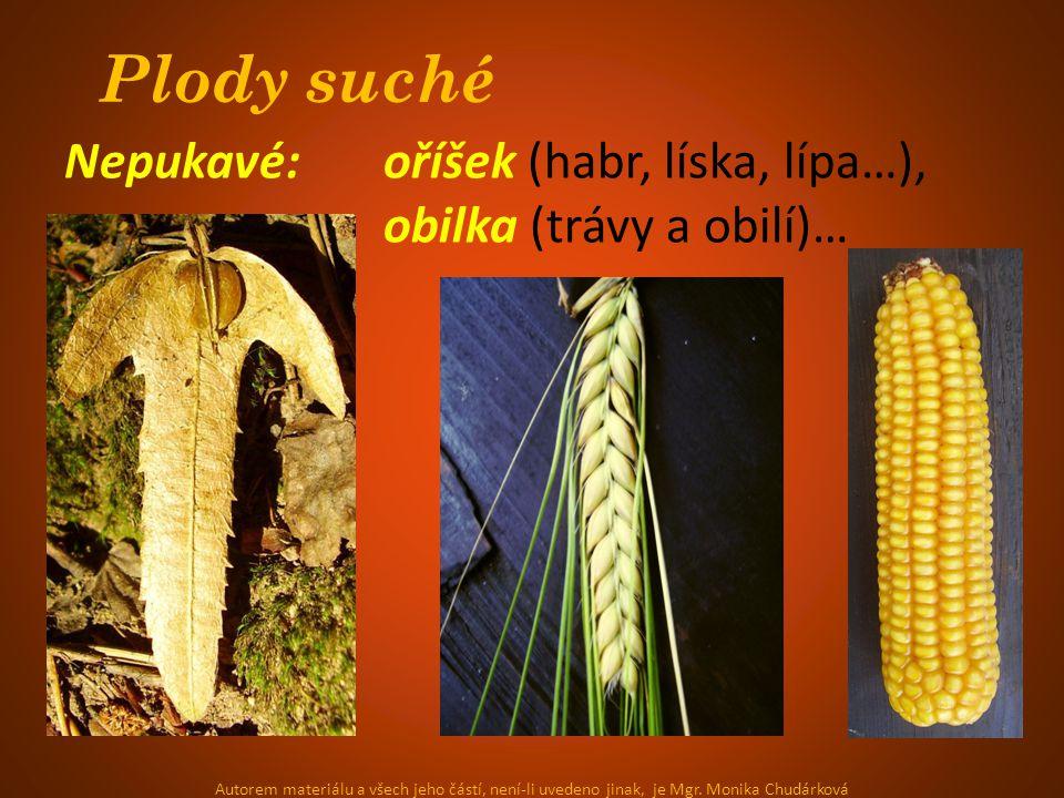 Plody suché Nepukavé: oříšek (habr, líska, lípa…), obilka (trávy a obilí)… Autorem materiálu a všech jeho částí, není-li uvedeno jinak, je Mgr.
