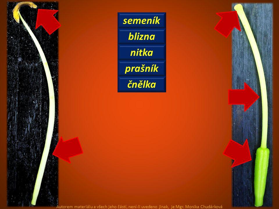 semeník blizna nitka prašník čnělka Autorem materiálu a všech jeho částí, není-li uvedeno jinak, je Mgr.