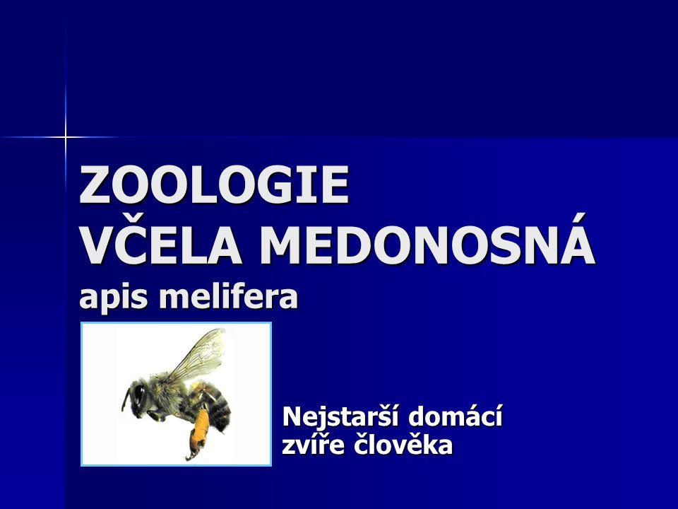 ZOOLOGIE VČELA MEDONOSNÁ apis melifera Nejstarší domácí zvíře člověka